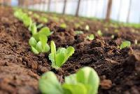 Andoser - ferma legumicola